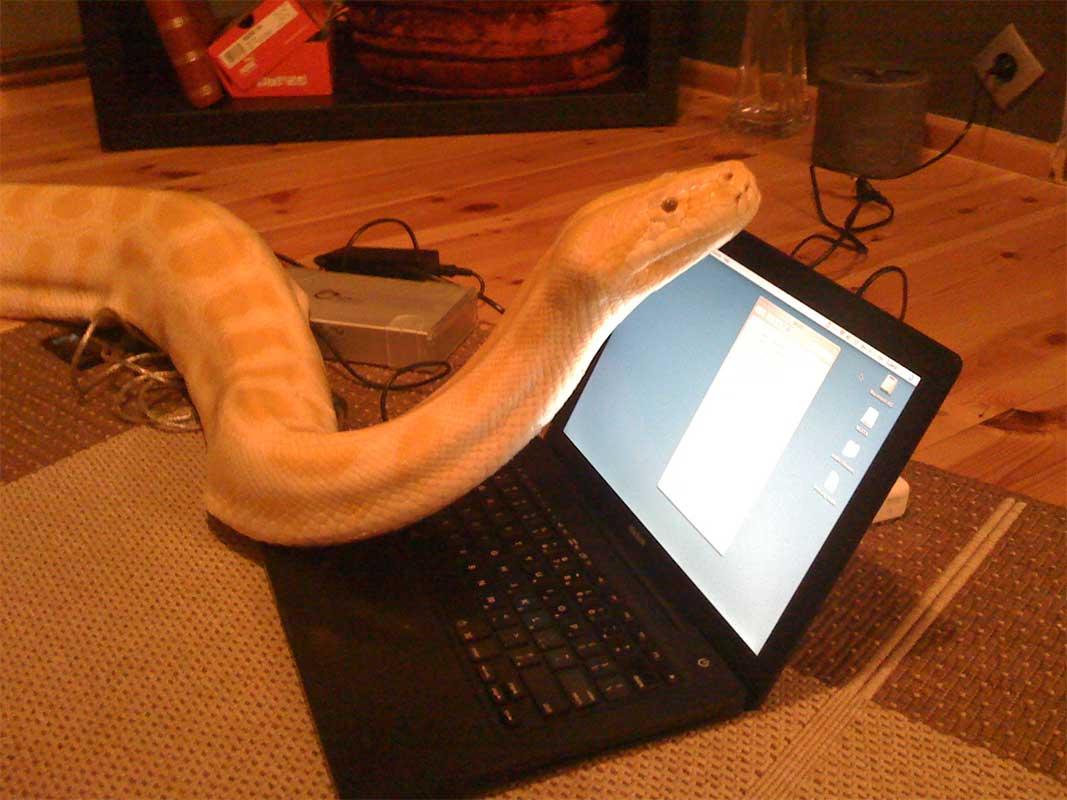 Julius the python on AT's MacBook